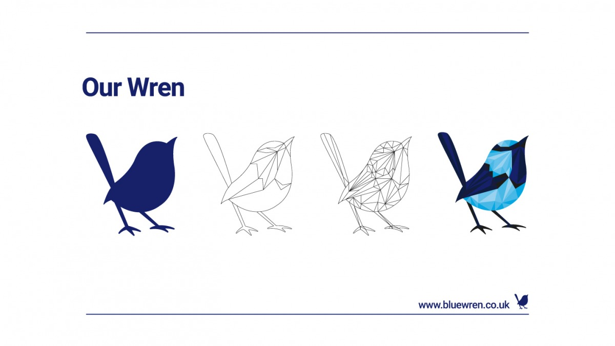 The evolution of our wren`